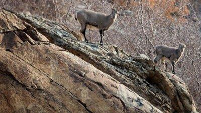 寧夏對賀蘭山岩畫進行搶救性數字化保護