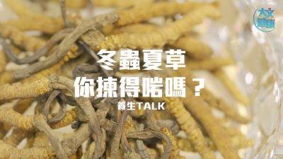 養生Talk | 冬蟲夏草 你揀得啱嗎?