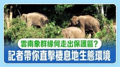 雲南象群緣何走出保護區?記者帶你直擊棲息地生態環境