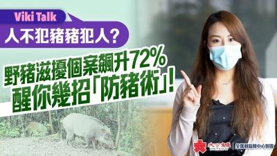 Viki Talk|人不犯豬豬犯人?野豬滋擾個案飆升72% 醒你幾招「防豬術」!